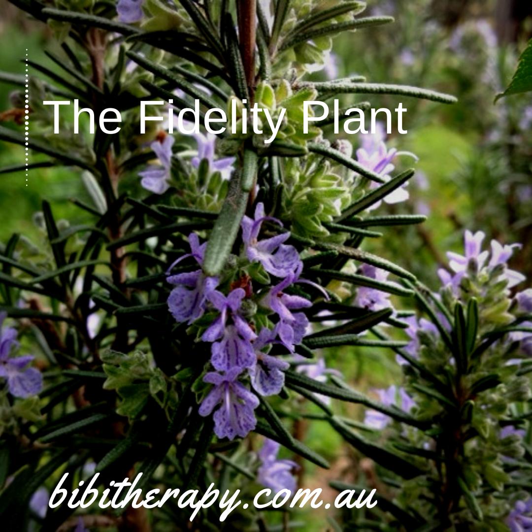 BIBITherapy_Rosemary Blossom
