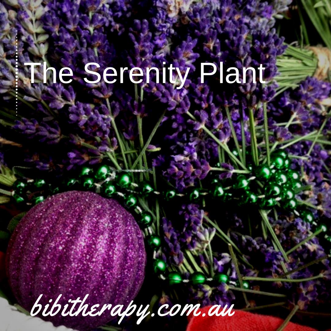Purple flowers of Lavandula angustifolia